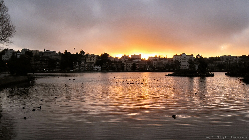 Early Birds are Seen in the Water during a Beautiful Sunrise over Lake Merritt, Oakland, CA